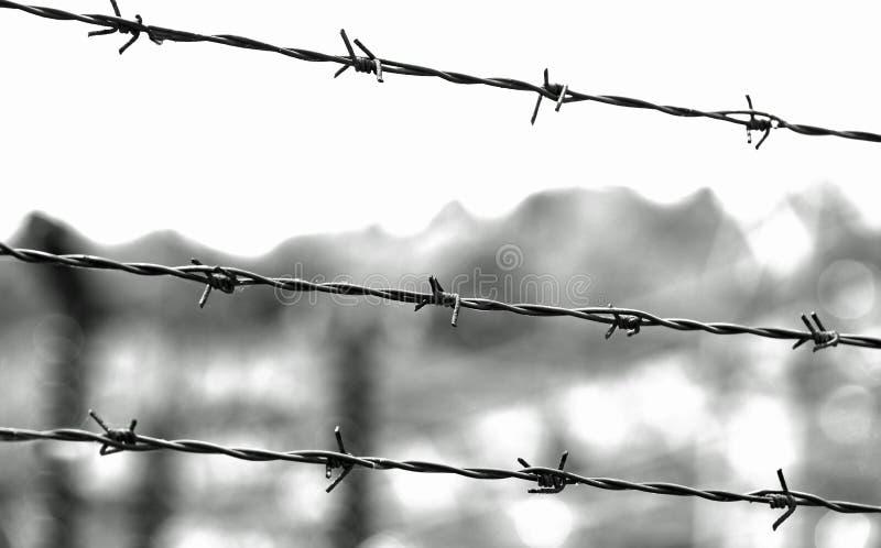 铁丝网三条线与刺的 免版税库存照片