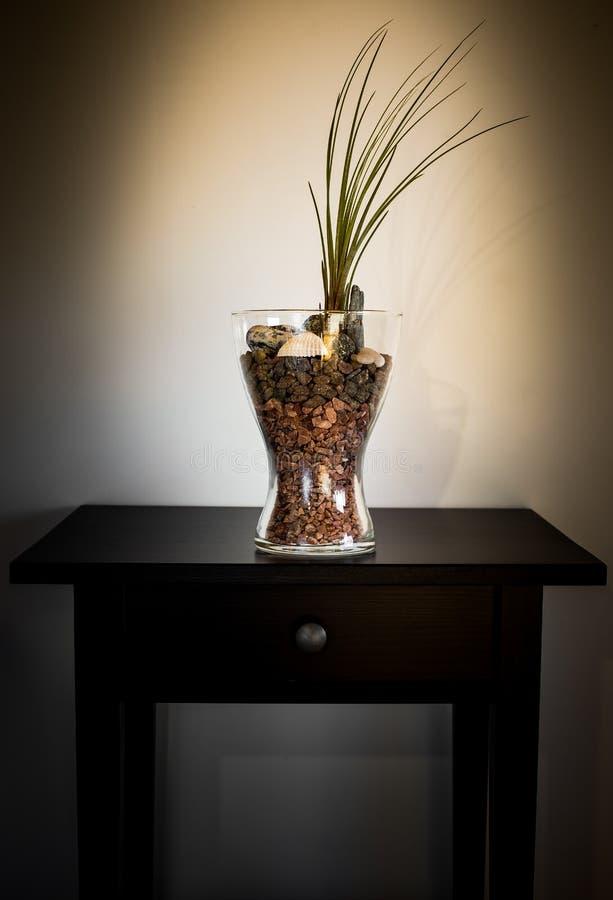 铁兰植物玻璃容器 免版税库存照片