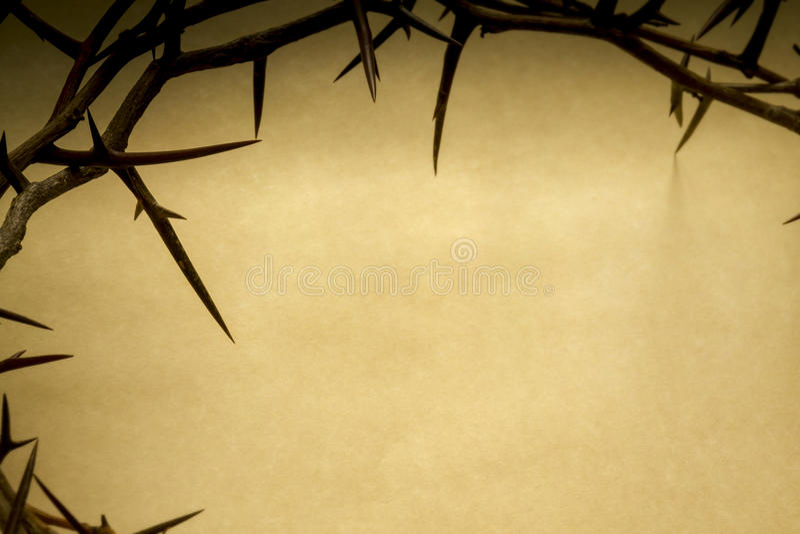 铁海棠代表耶稣在十字架上钉死 免版税库存图片