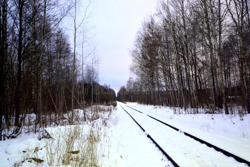 铁路在冬天森林里 库存图片
