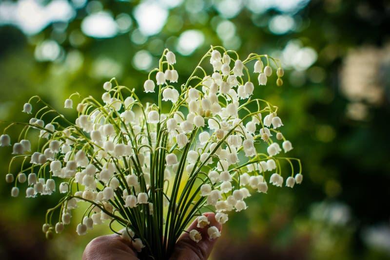 铃兰花束在绿色背景的一个简单的玻璃花瓶 与芬芳5月百合的背景 免版税库存图片