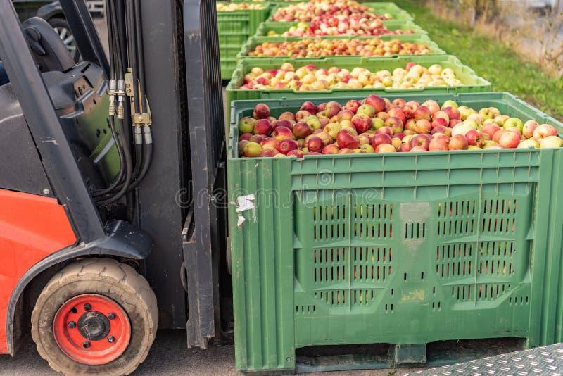 铲车运载条板箱果子 在容器的许多苹果 免版税库存图片
