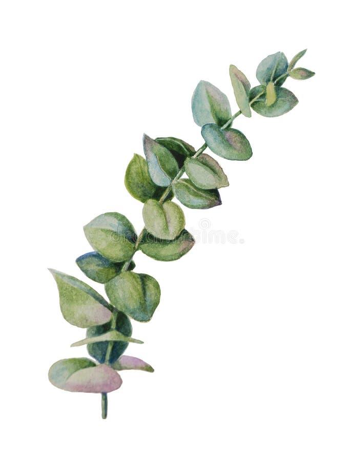 银元叶子和玉树分支 向量例证