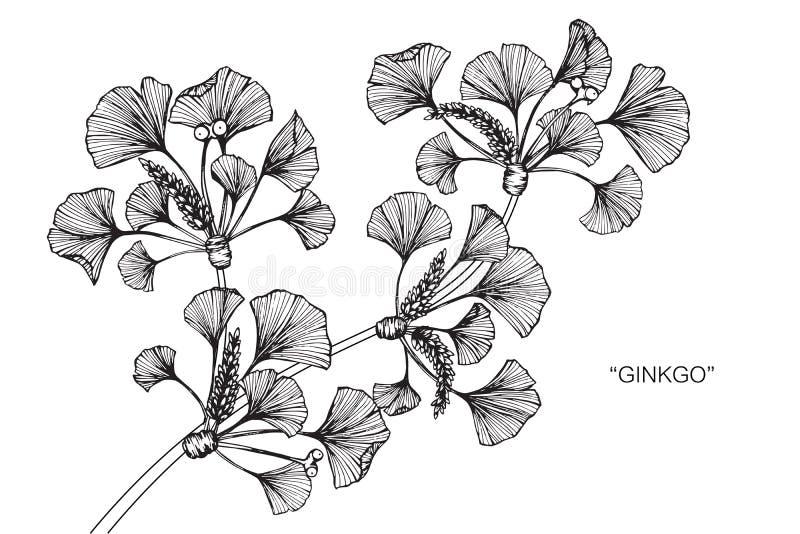 银杏树图画叶子和剪影健身房v图画经典案例图片