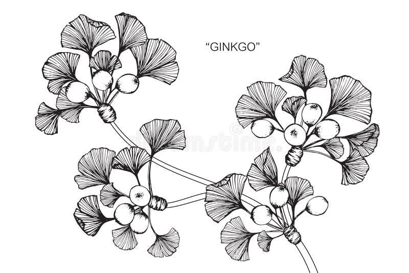 银杏树地产本质和问题.图画,花卉.剪影设计管理的叶子图片