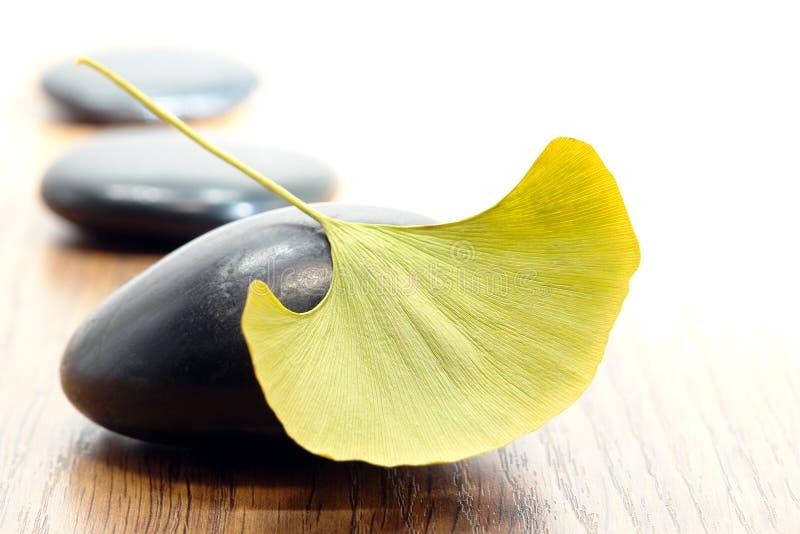 银杏树叶子按摩优美的石头 免版税库存照片