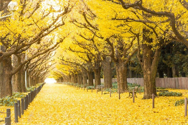 银杏树大道 Icho Namiki东京,日本 免版税图库摄影