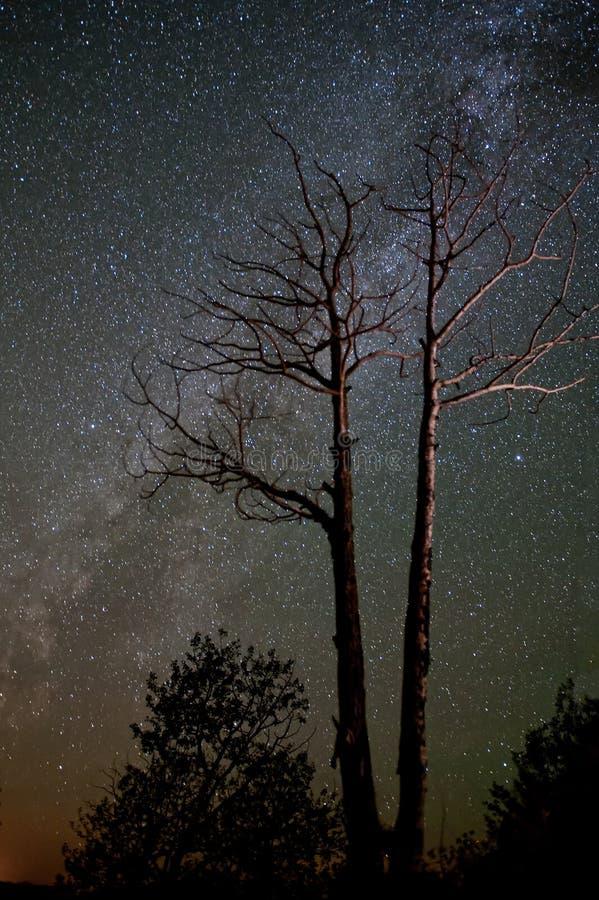 银河和贫瘠树 免版税库存照片