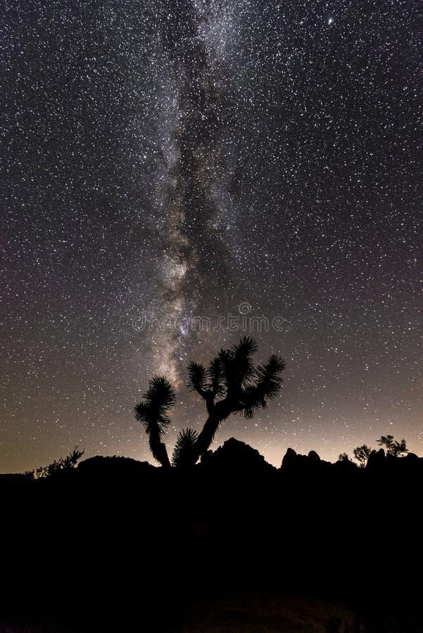 银河在约书亚树 库存照片