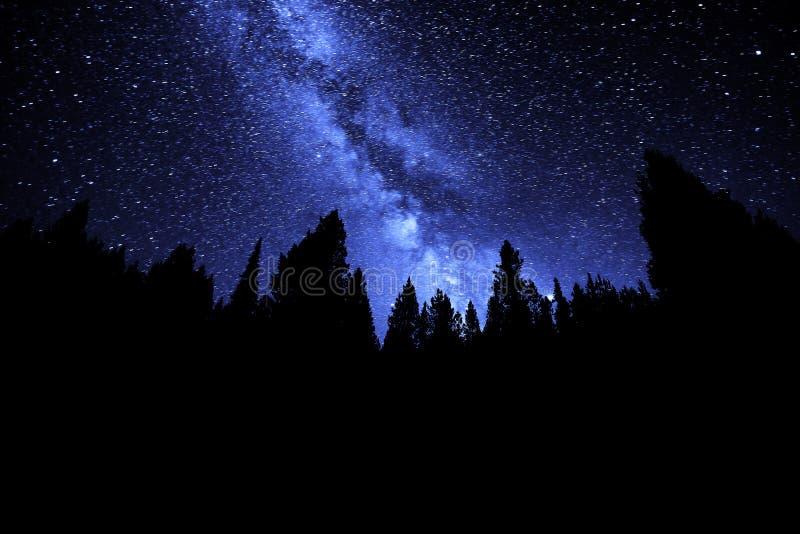 银河夜间星的天空森林 免版税图库摄影