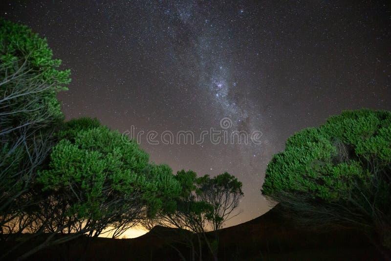 银河星系和繁星之夜天空与绿色树 免版税库存图片