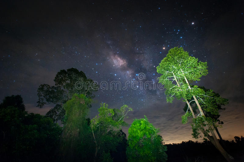 银河星系,与树的惊人的星的夜空 免版税库存照片