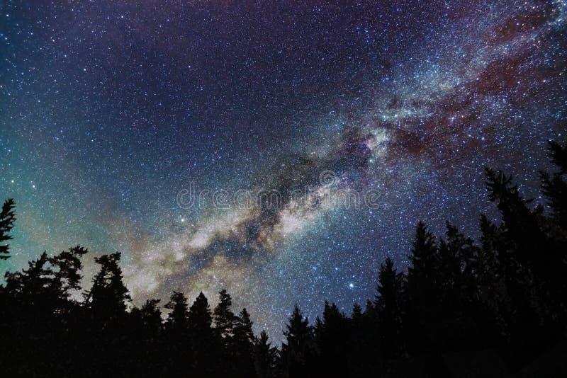 银河星系,与树的满天星斗的天空 满天星斗的晚上 免版税库存图片