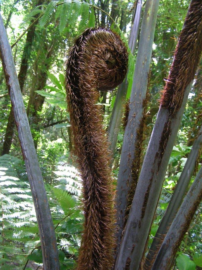 银色蕨开花的卡皮蒂岛有限的通入储备地区新西兰 库存图片