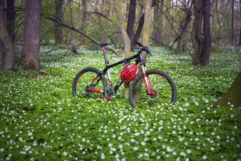 银莲花属和自行车 库存照片