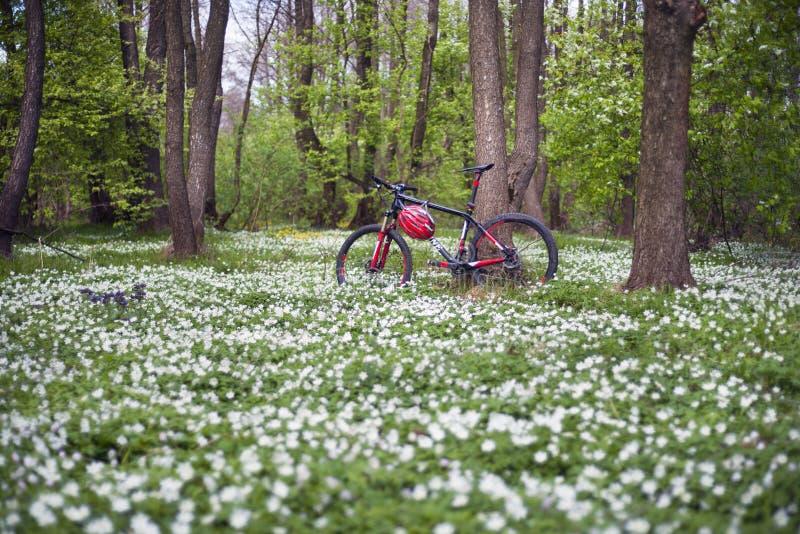银莲花属和自行车 免版税库存照片