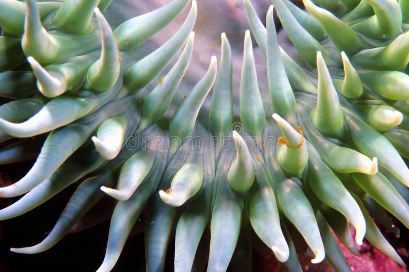 银莲花属绿色海浪 库存照片