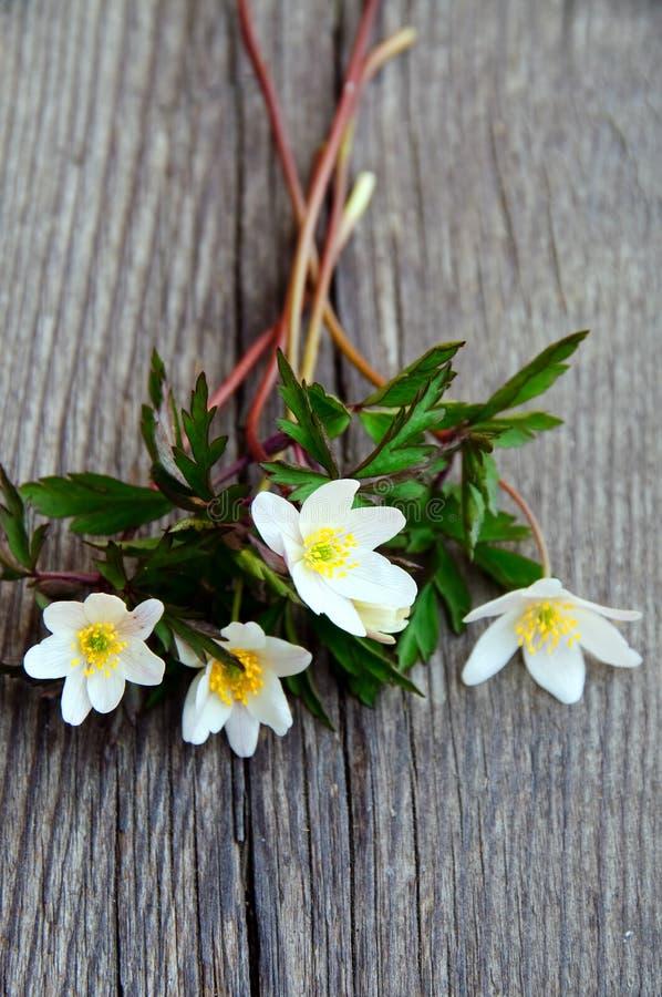 银莲花属花束木头 库存图片