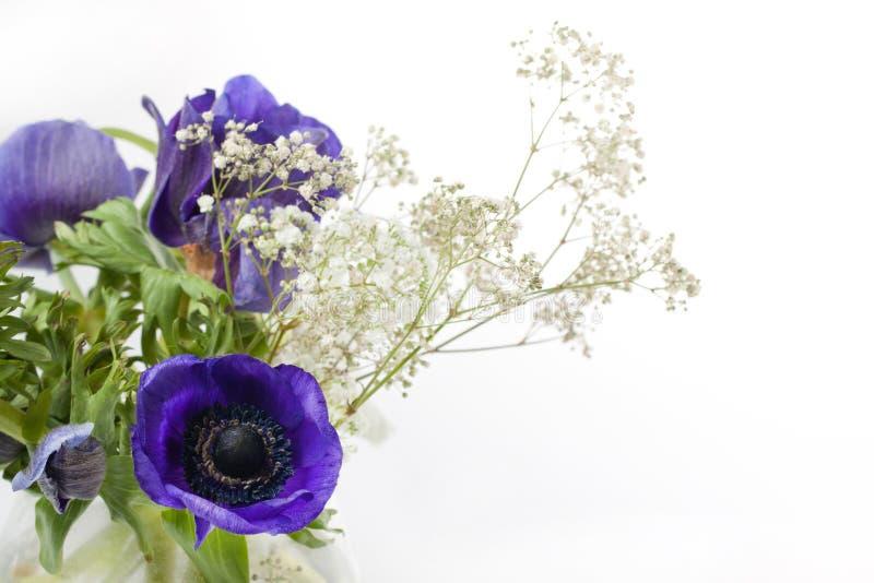 银莲花属蓝色花束 库存照片