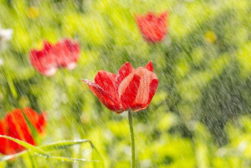银莲花属领域在森林里 免版税库存照片