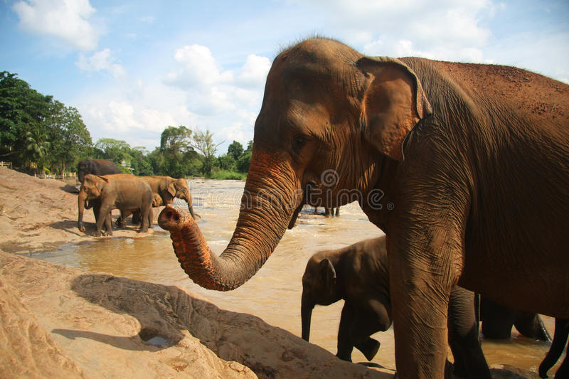银行大象河 图库摄影