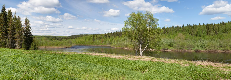 银行桦树偏僻的河 免版税库存照片