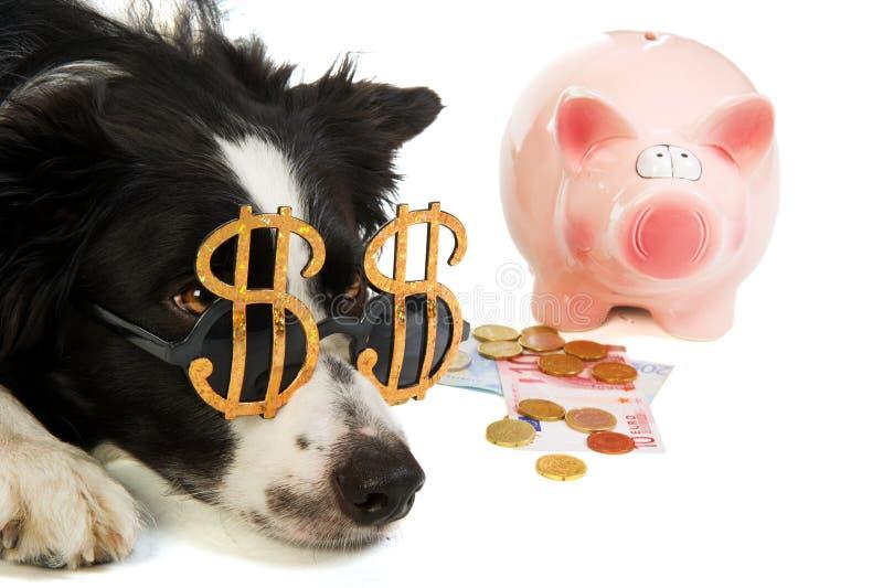 银行贪心狗的美元 免版税库存照片