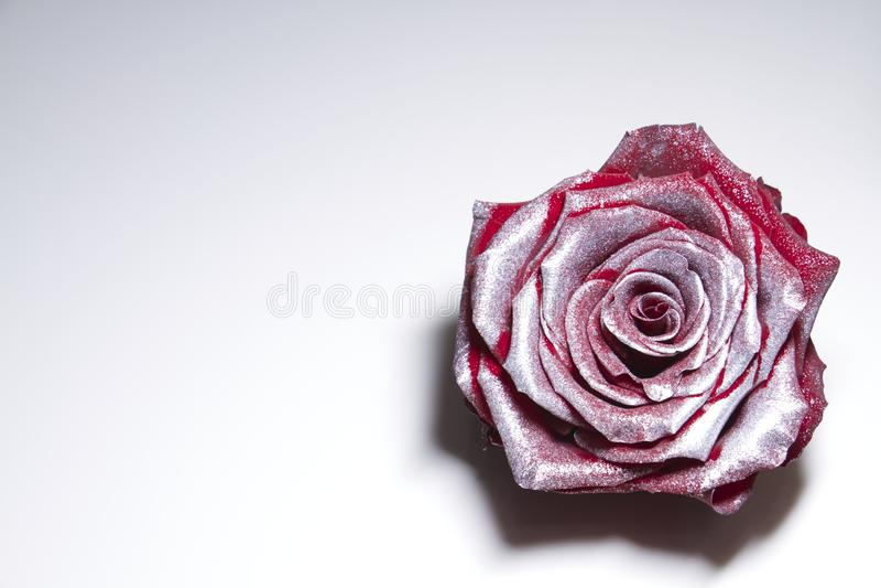 银镀了红色玫瑰 库存照片