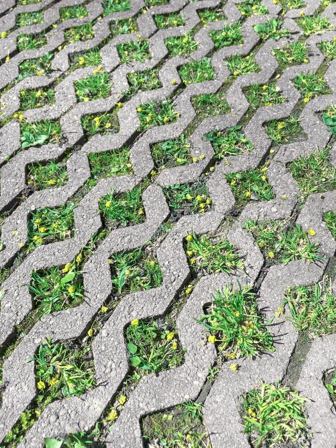 铺块和绿草在庭院小径的灰色混凝土 库存图片