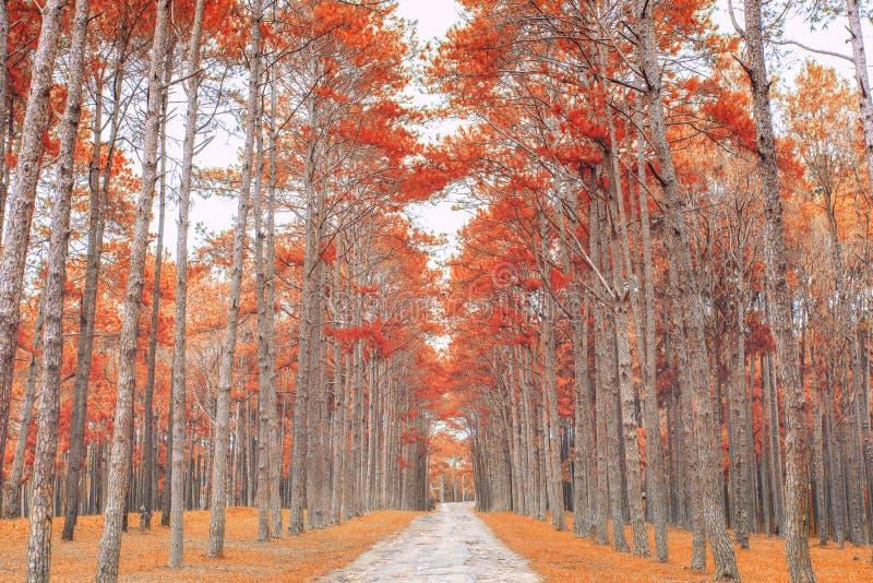 铺沙与树的车道在一个晴天在秋天 库存图片