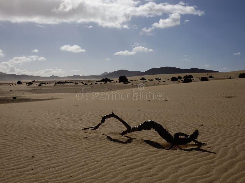 铺沙样式自然公园, Corralejo,金丝雀海岛,西班牙 图库摄影