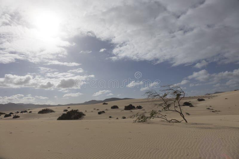 铺沙样式自然公园, Corralejo,金丝雀海岛,西班牙 免版税库存图片