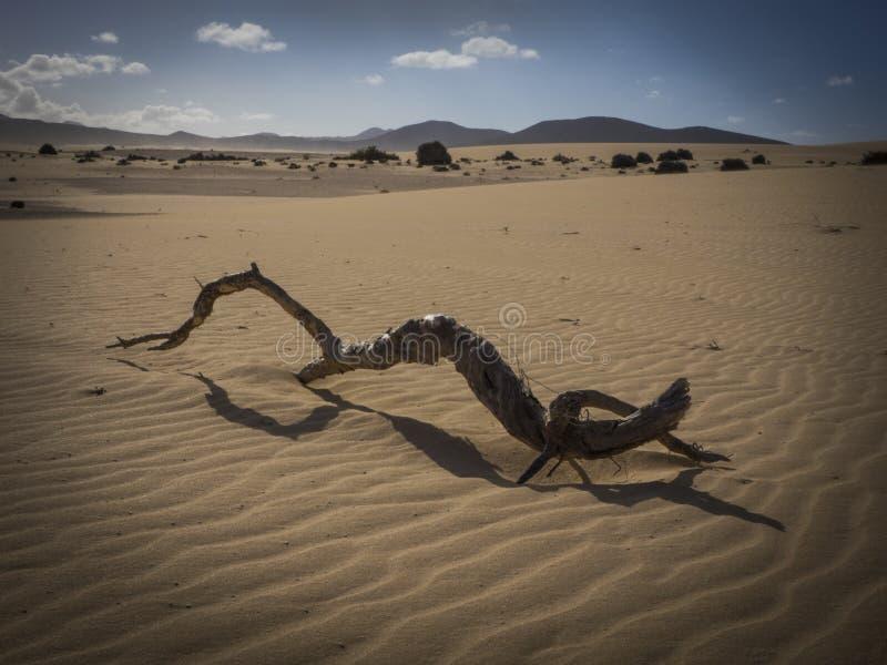铺沙样式自然公园, Corralejo,金丝雀海岛,西班牙 库存照片