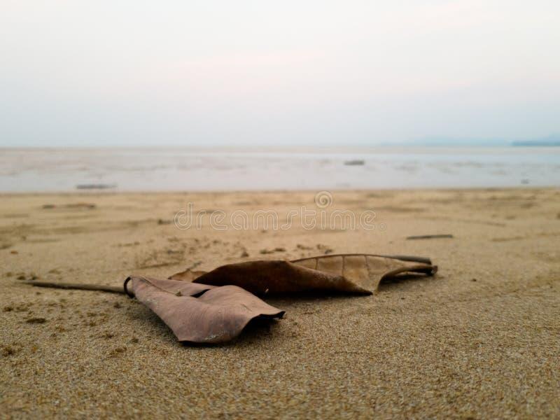 铺沙海滩,与在前景的死的事假 免版税库存图片