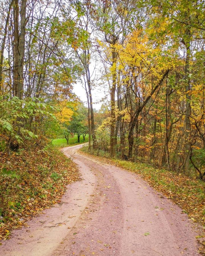 铺石渣在秋天的路与黄色树 免版税库存图片