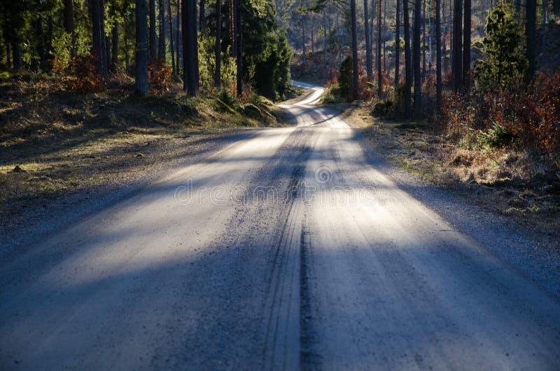 铺石渣路在一个具球果森林里在春天 免版税图库摄影