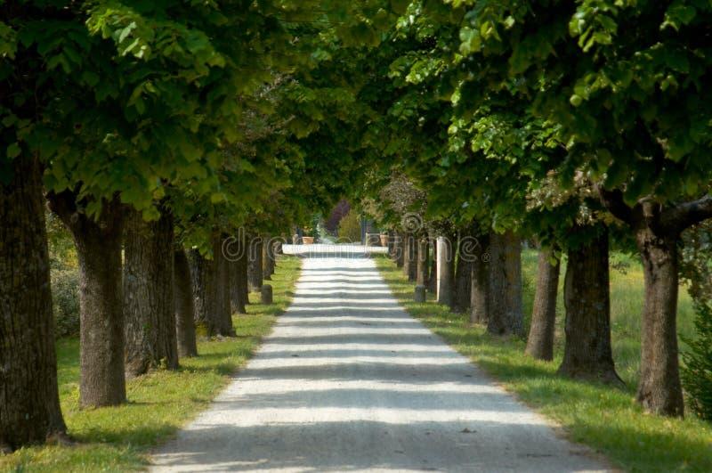 铺石渣ital被排行的路结构树 免版税库存照片