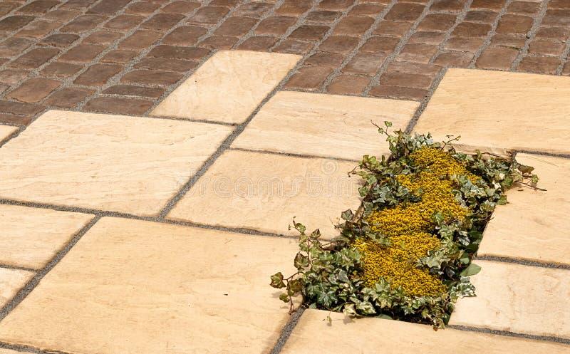 铺细节植物插页的庭院 免版税库存图片