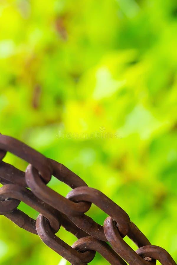 链铁生锈的被风化的长圆形连接在被弄脏的植物群绿色背景拷贝空间的刚性基本的特写镜头 免版税库存照片