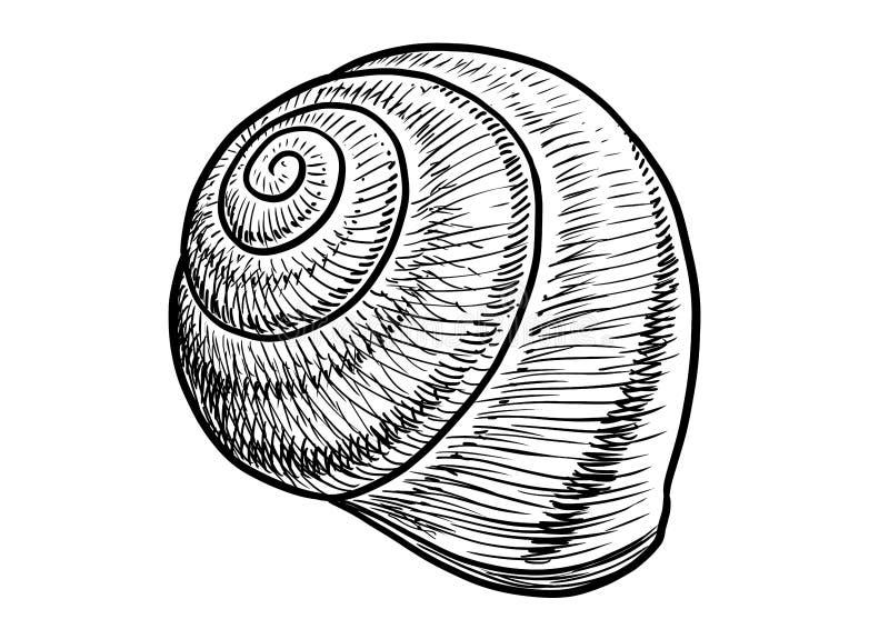 锅牛例证,图画,板刻,墨水,线艺术, vectorGarden蜗牛壳例证,图画,板刻,墨水,线 向量例证