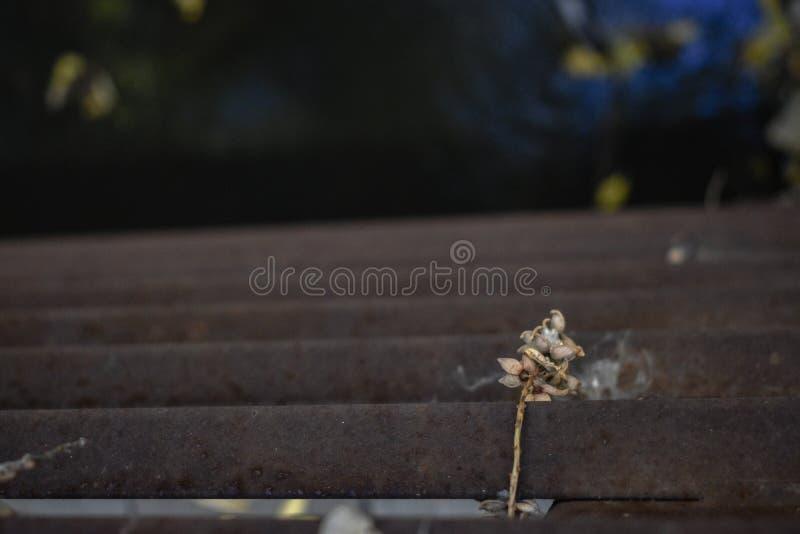 锈迹斑斑的栏杆上盖着干花 免版税库存图片