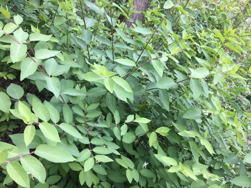 锋利的绿色叶子 库存图片