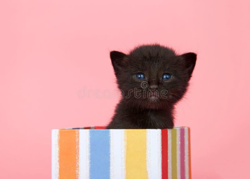 锐化在礼物外面的黑小猫 免版税库存照片