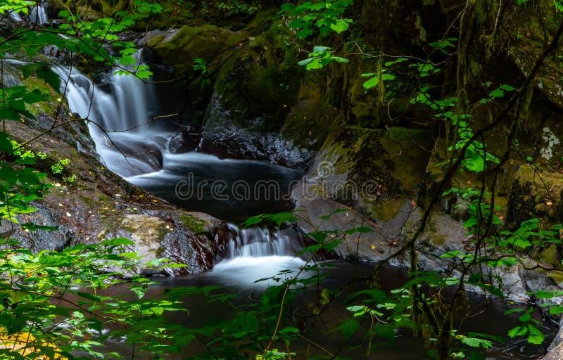 锐化通过树的甜小河路径源头水流量 免版税库存图片
