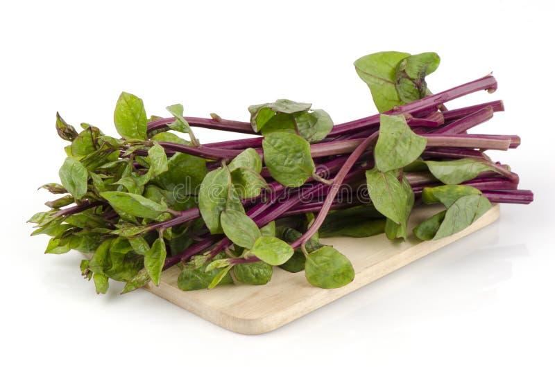 锡兰菠菜,东印度人菠菜,马拉巴茄属植物(落葵Linn。(巴塞利亚rubra Linn。) 免版税库存照片