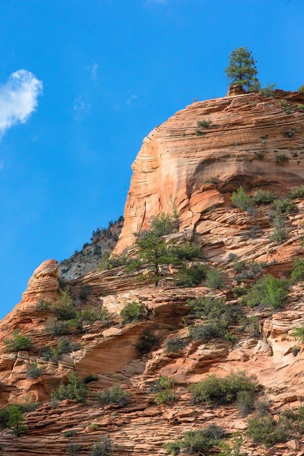 锡安国家公园岩层 免版税库存照片
