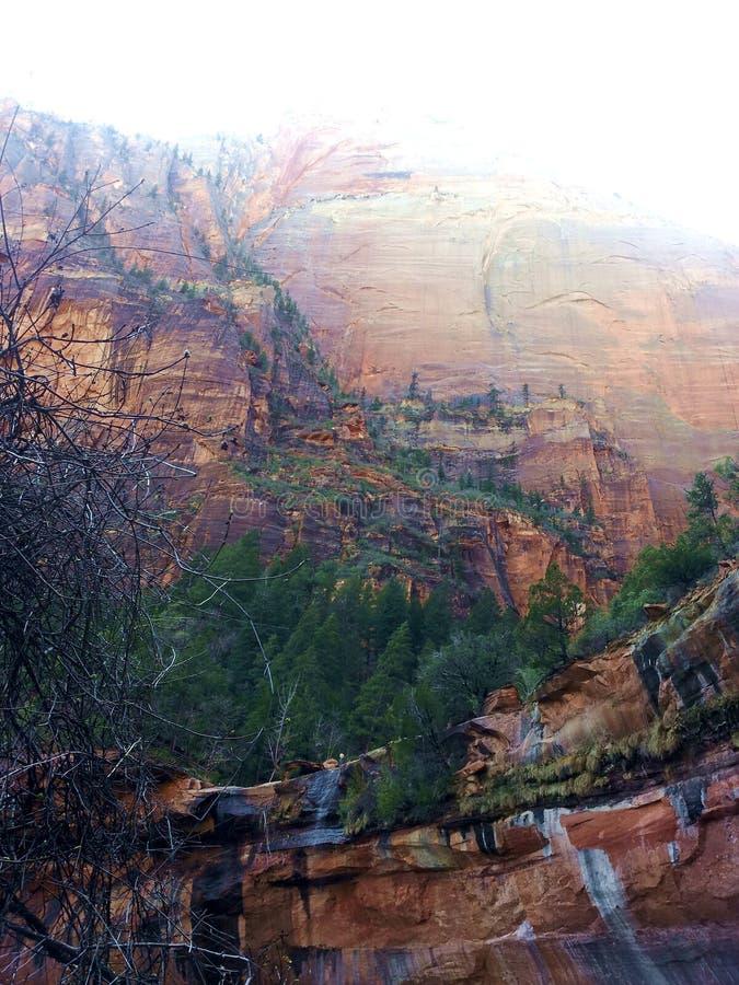 锡安峭壁和树风景 库存图片
