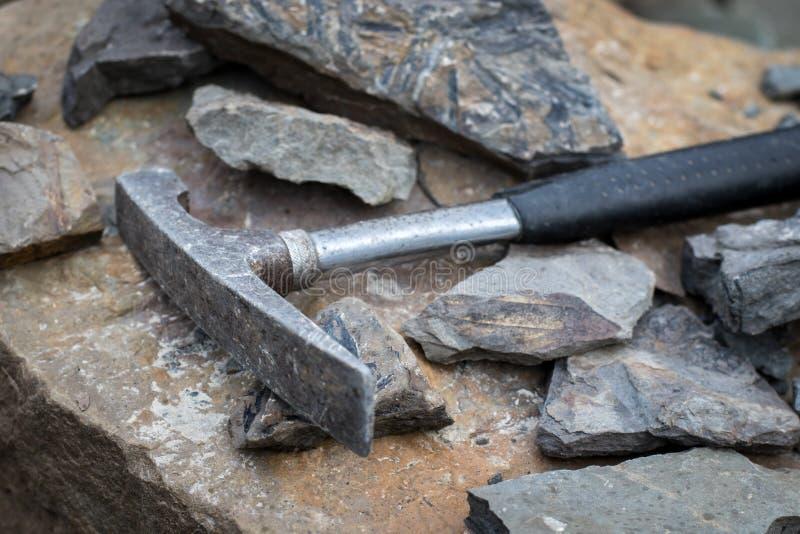 锤子工具和化石 免版税库存照片