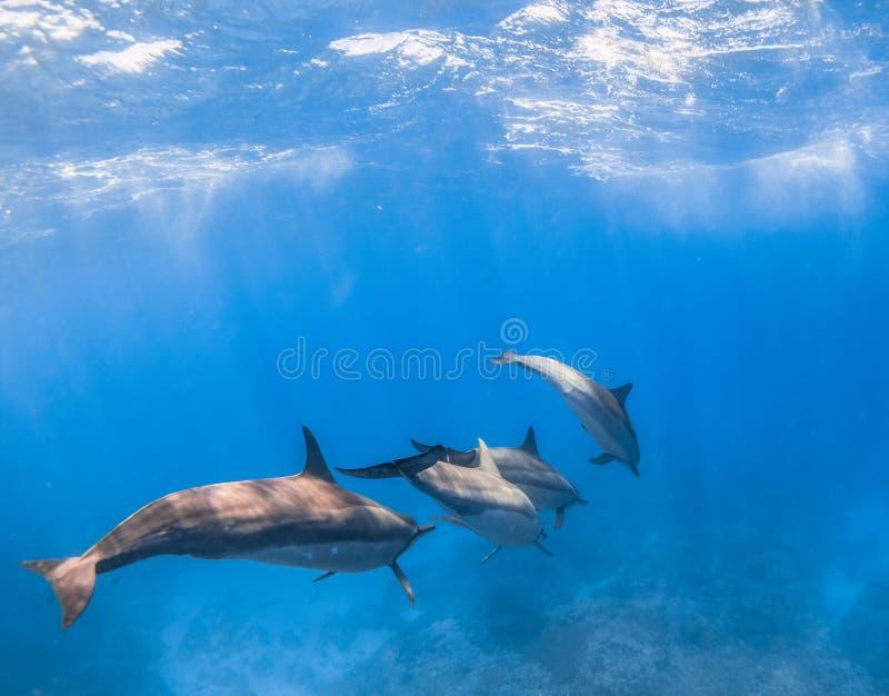 锭床工人海豚 库存照片