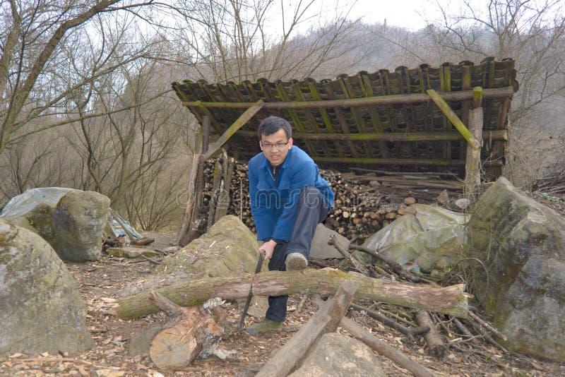 锯切木头 库存图片
